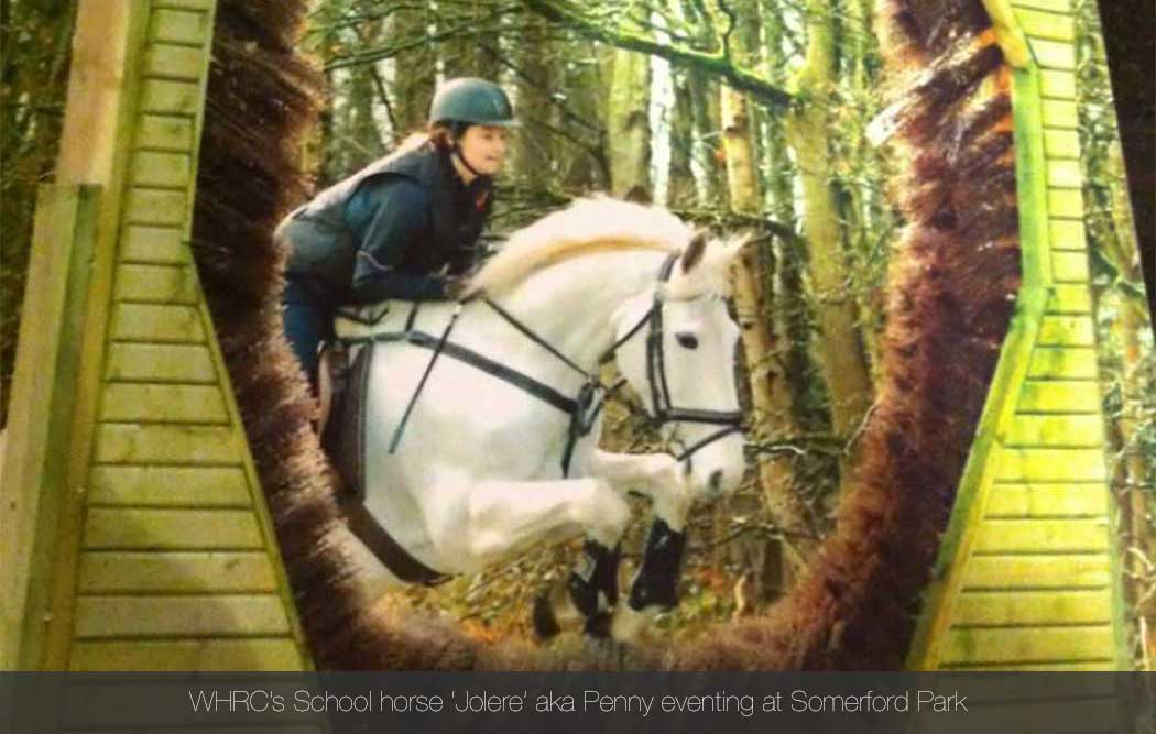 Willington Hall Riding Centre Openning Frequently Asked Questions Lessons Hacks Dressage Show Jumping Gymkhanas Rallies Vaulting