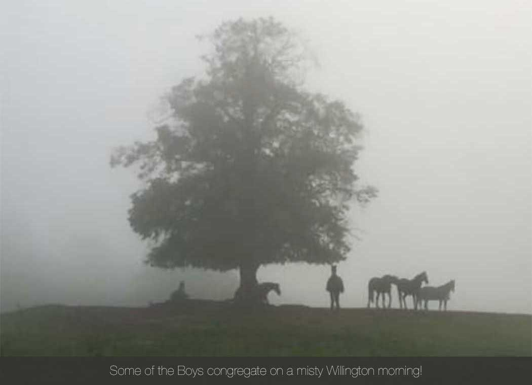 Willington Hall Riding Centre Opening How to Contact Some of the Boys congregate on a misty Willington morning